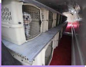 Shipping Cargo Plane